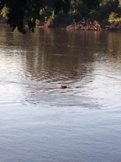 hippo river